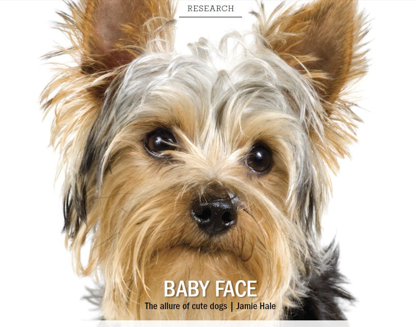 Baby Face The Allure Of Cute Dogs The Bark