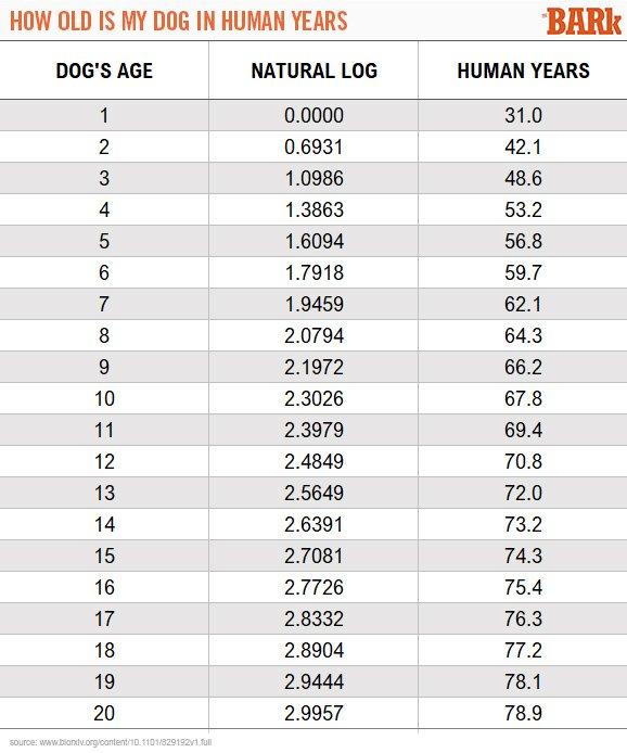 How To Calculate Your Dog S Age In Human Years The Bark