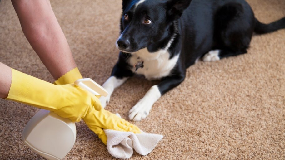 Clean Carpet Pet Stains Naturally The Bark