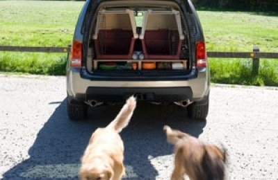 Dogs Jumping out of Car