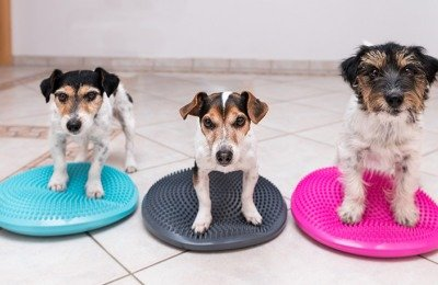 Dogs in training standing on pads.