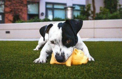 dog communication about toys