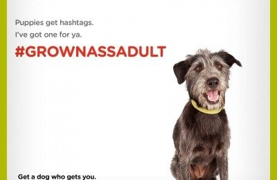 Shelter Dog Adoption Campaign