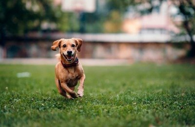 dog gps trackers for small dogs