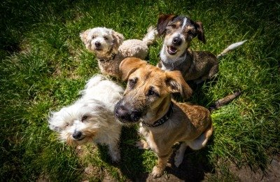 how to pick a dog daycare