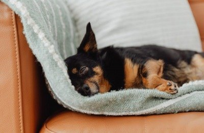 Dogs in the study wore activity monitors on their collars for a two-week period, and their owners filled out a questionnaire on the dogs' sleep patterns.