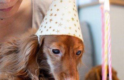 determine your dogs age