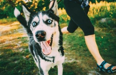 exercising with dogs boosts success