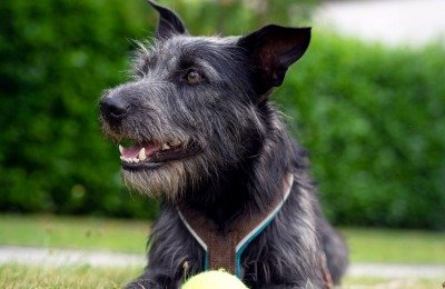 enrichment activities for dogs