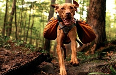 best hiking backpack for dogs