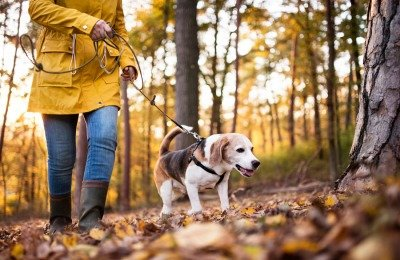 geocaching with dog activities