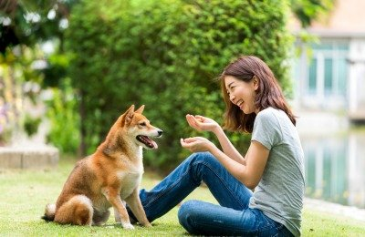 become dog trainer