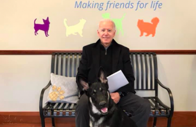 joe biden adopts dog from rescue