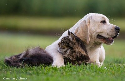 A dog and a cat snuggle up together, and are best friends.
