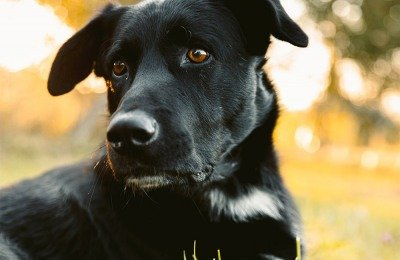 what we love about dogs / black lab