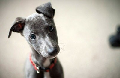 More Empathy for Dogs Than People