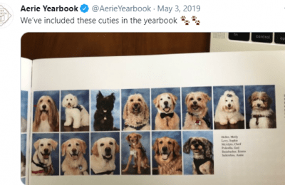 parkland therapy dogs in year book