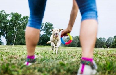 training dogs with toys to counter aggression