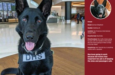 TSA Detection Dog Calendar