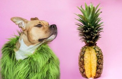pineapples are safe for dogs