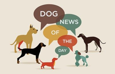 dog news of the day
