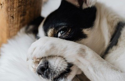 why dogs fart