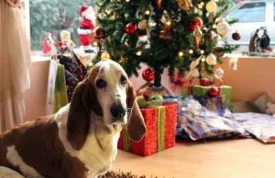 how to stop dog from peeing on christmas tree