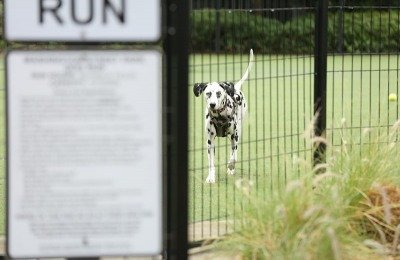 most common dog-park related incidents