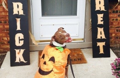 Dog, Halloween/Treat safety tips