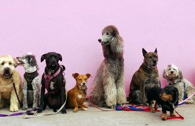health risks by dog breed