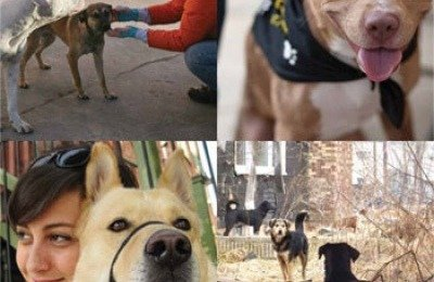 Clockwise: PJ Hightower offers stray dogs positive human contact; goodwill ambassador Sonny; dogs in the urban wild; Cristina Garmendia and her adopted companion Lady Dulcinea.