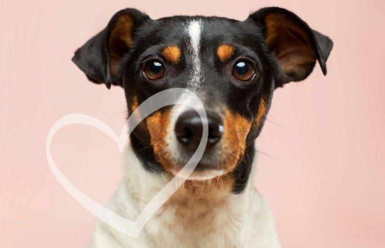 valentines gift guide for dog lovers