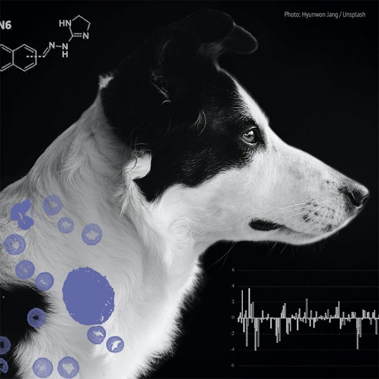 mast cell cancer in dogs