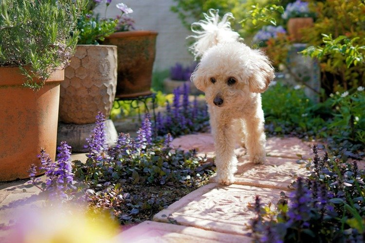 keep dog out of garden