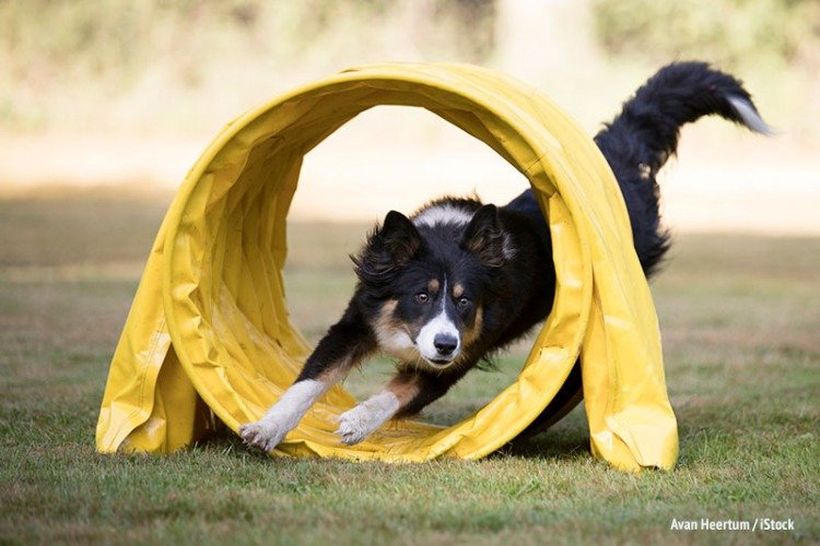 canine enrichment ideas