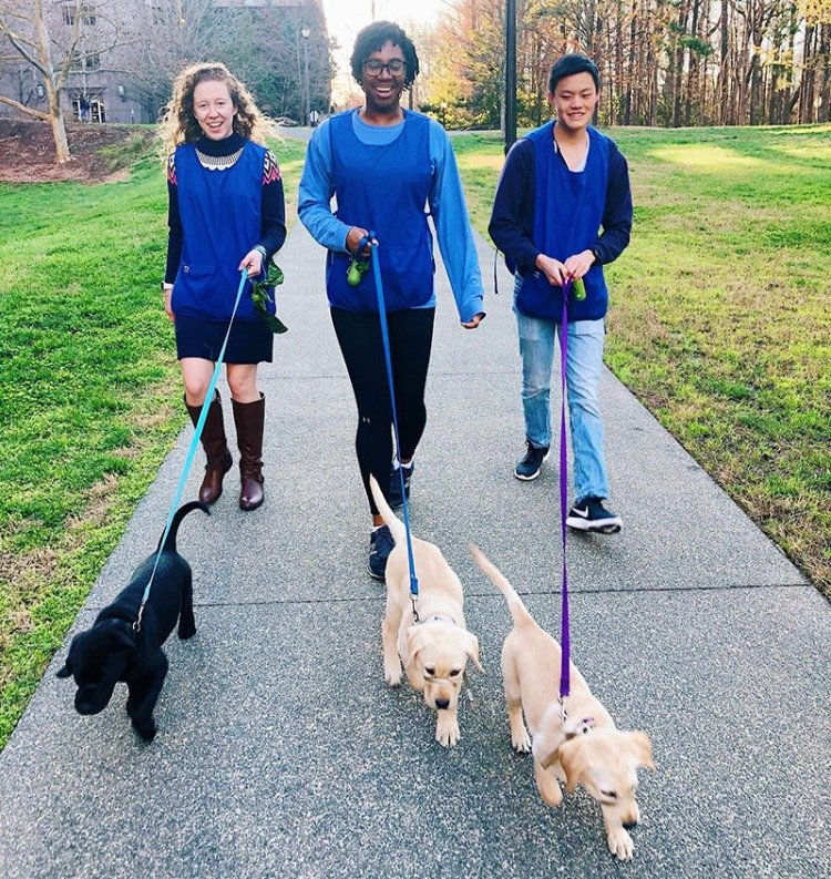 Canine Companions for Independence puppies / Duke