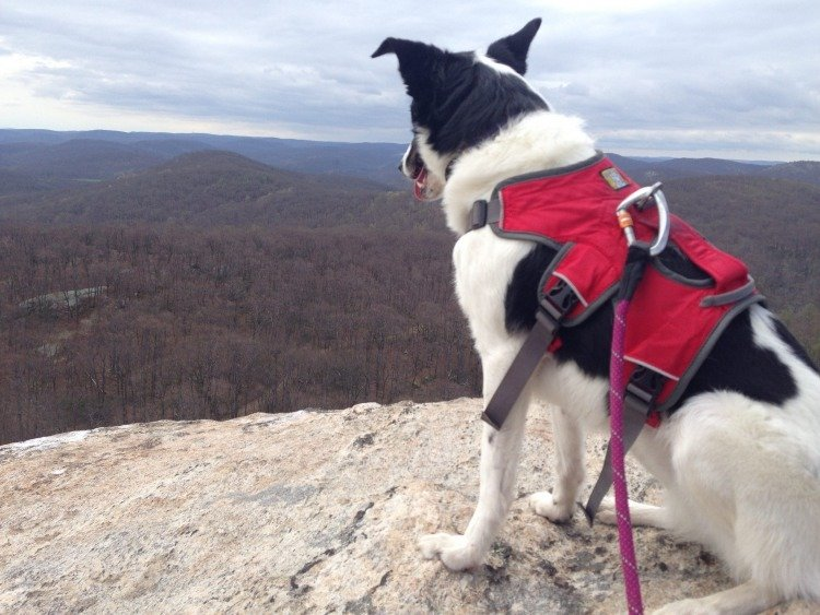 spring activities for dogs