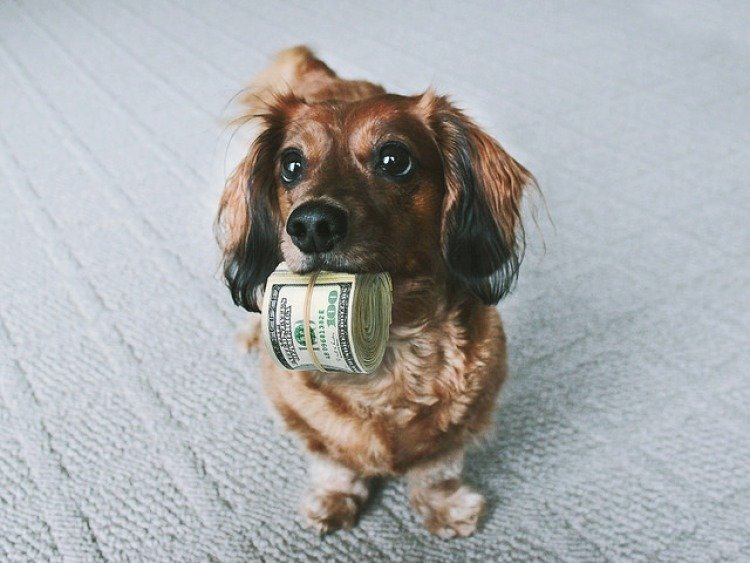 pet insurance exclusions