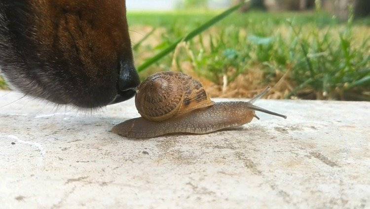 snail detection dogs