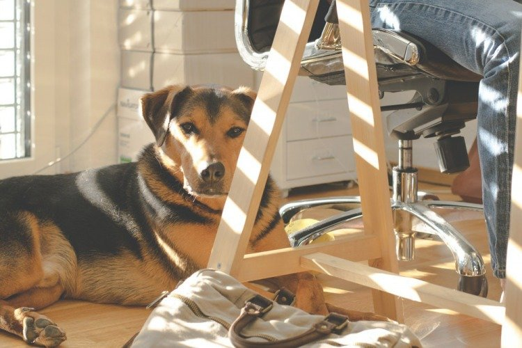 Dogs at Work Lower Stress