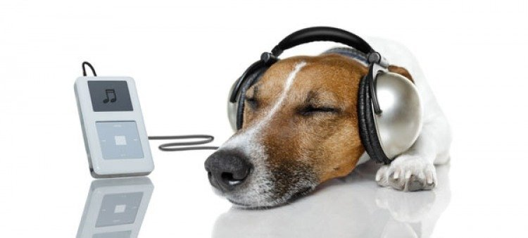 Listening to Music Makes Dogs Happy - Deezer Streaming Service
