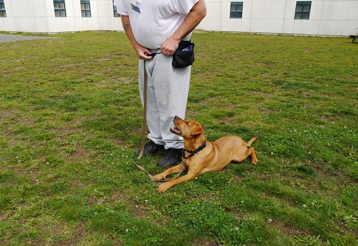 Prison dog-training program
